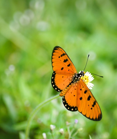 Tal der Schmetterlinge